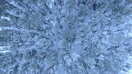 idylický : Beautiful winter forest. Aerial view from the drone.