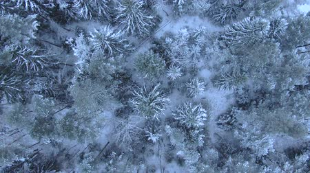 styczeń : Beautiful winter forest. Aerial view from the drone.