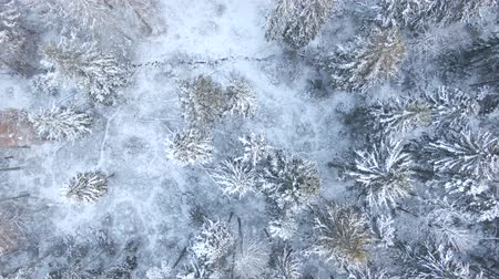 winter day : Beautiful winter forest. Aerial view from the drone.