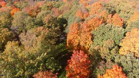 epik : Epic Flight Over Autumn Forrest. Colorful Trees Drone Aerial. Stok Video