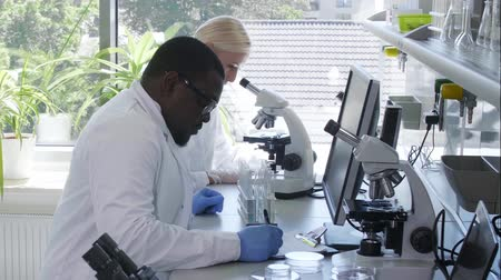 afro americana : Scientist working in lab. Doctors making medical research. Laboratory tools: microscope, test tubes, equipment. Biotechnology, chemistry, science, experiments and healthcare concept. Stock Footage