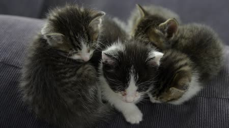 kotě : sleepy kittens