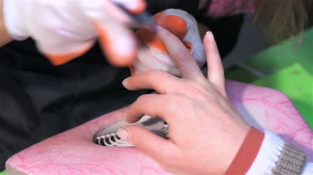 mimos : Actual process of performing manicure. Woman in nail salon