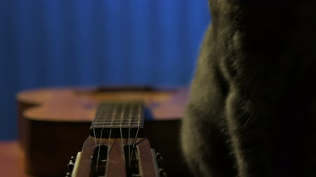 Big grey cat sitting near guitar in workshop and jumps from table