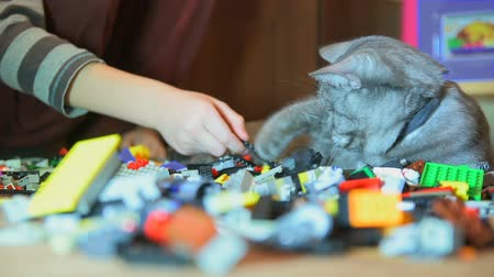 maravilhoso : Boy is playing with gray cat that lies on construction set Stock Footage