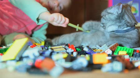 kotki : Girl is playing with gray cat that lies on construction set and he
