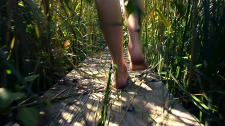 falu : Legs of young girl walking through thickets of reeds along wooden ladder