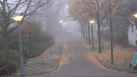 hides : Amsterdam city street in autumn morning the fog