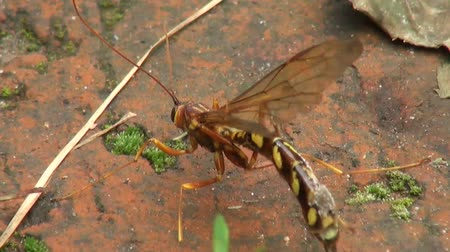 чистый : footage of a wasp cleaning itself on wood