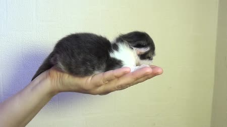 kotě : Little kitten on a hand
