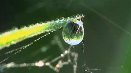 spider web : Drops of dew on the grass  Stock Footage