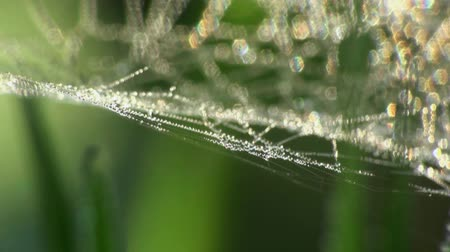микро : Drops of dew on a spider web  Стоковые видеозаписи