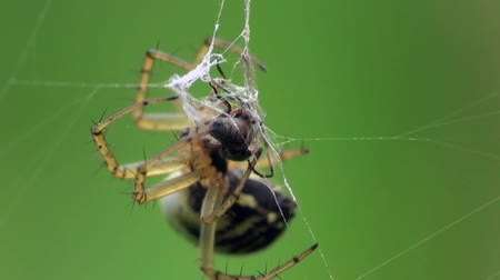 spider web : Spider macro Stock Footage