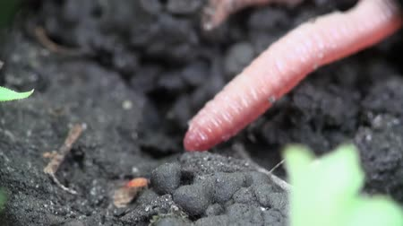 féreg : Earth worm is hiding in the ground