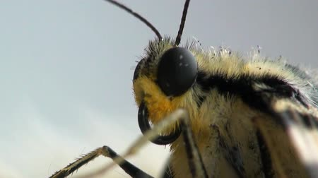 bugs : beautiful head macro