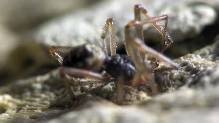проливая : Spider stopped on a rock by the sea, macro