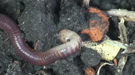 féreg : Earth worm is hiding in ground