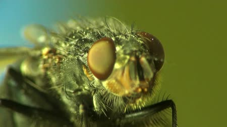 claw feet : Head Housefly fly macro insect