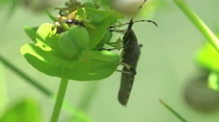 Housefly fly bug macro insect Stock Footage