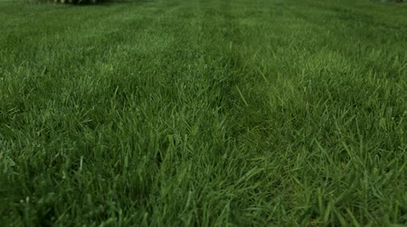 perimeter : Beautiful garden of private garden. Green grass lawn. Beautiful backgrounds. Stock Footage