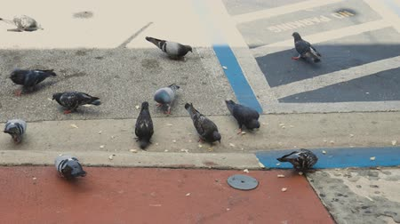 Close up view of group of doves eating from colorful sidewalk.