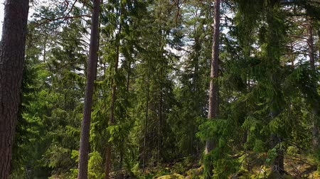 musgo : Beautiful nature landscape view. Gorgeous green forest trees and plants on rocky landscape on summer day. Sweden Europe