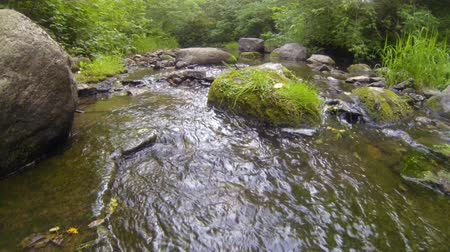 ribeiro : Forest stream running over rocks Stock Footage