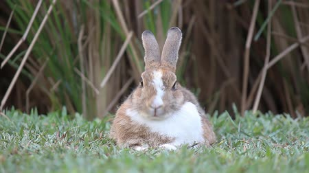 animais e animais de estimação : Rabbit in the farm Stock Footage