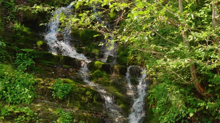 torrente : Epic Waterfall in the summer forest. Stream Stock Footage