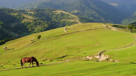 pastar : Wild horses Grazing on a field in the mountains Vídeos