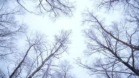 steady cam : The Forest in Winter