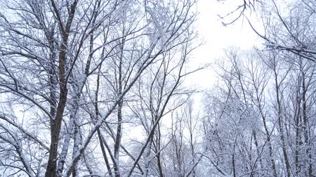 steady shot : The Forest in Winter