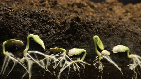 cherish : Germinating Seed Growing in Ground Agriculture Spring Summer Timelapse