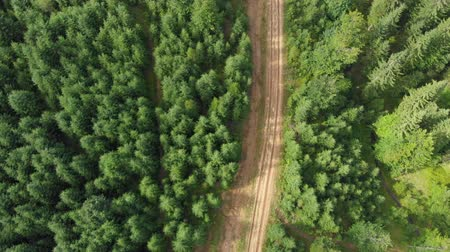 drive through : Road in the green Forest aerial shot. Beautiful summer forest landscape at sunny weather