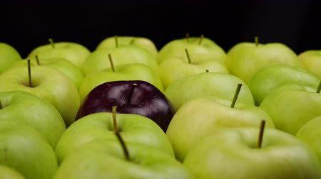いろいろ : Fresh nature apples background. Natural Apple harvest from tree. Grocery store, department of fruits and vegetables. 動画素材
