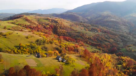 lombhullató : Drone flight over fall forest. Autumn leaves and trees. Orange, Red, Yellow and Green beautiful scene.