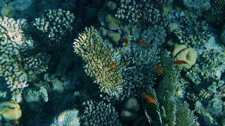 mergulhador : Underwater Coral Reef with Fishes Seascape