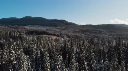 meseország : Winter season snowy mountain forest aerial shot, natural landscape, frozen forest