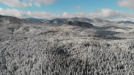 meseország : Winter season snowy mountain forest aerial shot Stock mozgókép