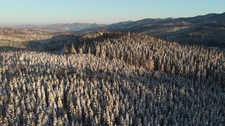 meseország : Winter forest in Mountain, Aerial Frozen snowy Landscape, Snowy season