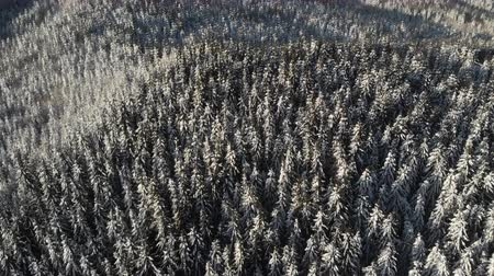 meseország : Forest in Winter , Aerial Frozen snowy Landscape, Snowy season