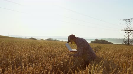 ekili : Farmer with a laptop in the field checks the quality of wheat