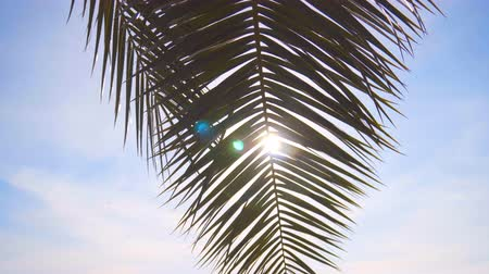 trópicos : Palm branch against the sky and the rays of the sun