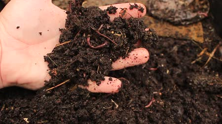 Macro shot of worms and larvae that move in the fertile soil, are used to fertilize the soil and make it good for crops. animals used as bait in fishing to catch fish. Concept:biology, soil fertility.