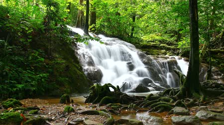 deep forest : Time Lapse of tropical waterfall in deep forest, zoom in  Stock Footage
