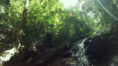 HD Dolly: tropical waterfall in deep forest