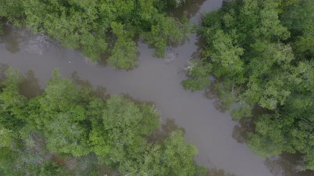 Aerial view of the beautiful Everglades with diverse foliage, lakes, and mangrove forests Stock Footage