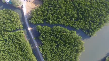 4K Aerial of road in mangrove forest to local fisherman port in South of Thailand