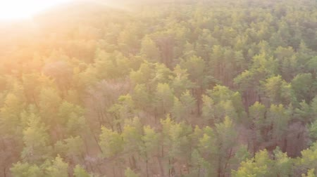 autumnal : Aerial view of a pine-deciduous forest in early spring at dawn