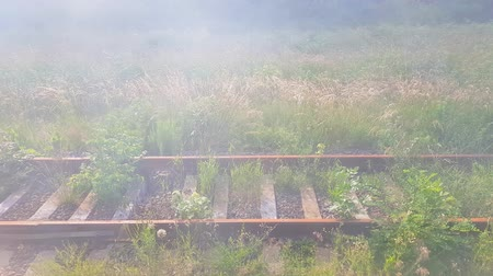 archief : Abandoned railway rusty rails overgrown with grass in the fog Stockvideo